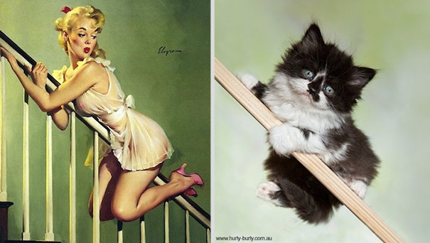Bilderesultat for cats pinups