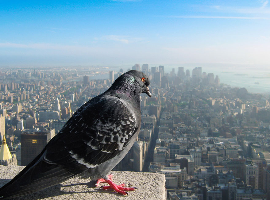 How Our World Would Look If You Were A Bird | Bored Panda