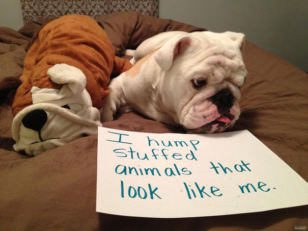 Funny Public Shaming Of Dogs