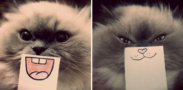 Guy Uses Sticky Notes To Give His Cat Emotions