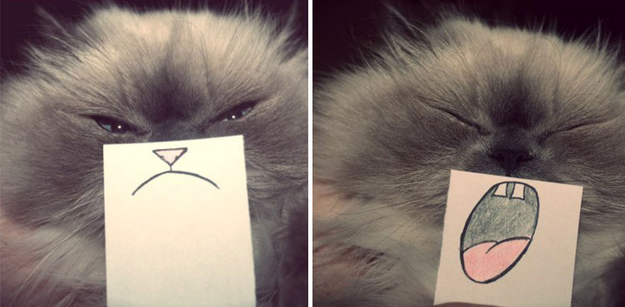 post-it-sticky-notes-cat-emotions-3