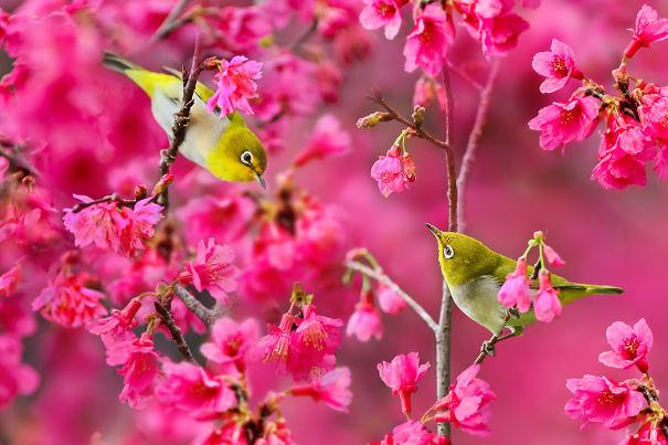 Amazing Bird Photography By Sue Hsu