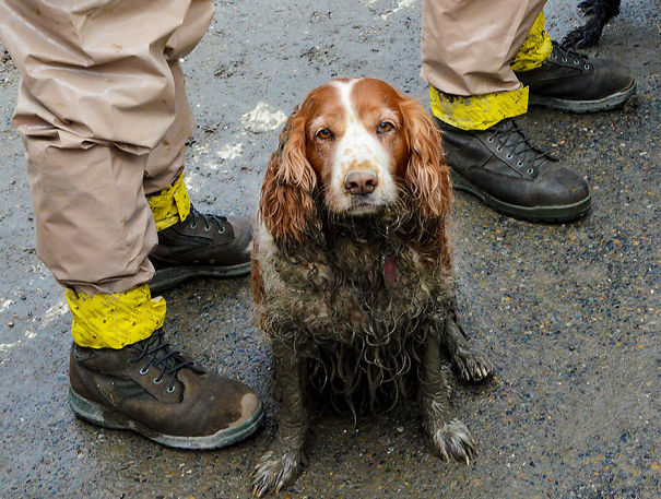 This Is How A Search Dog Looks After A Hard Day's Work