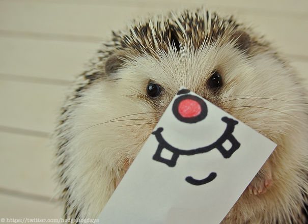 These Hedgehog Faces Are Probably The Cutest Thing On Twitter Right Now