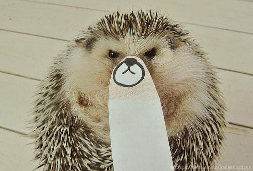 hedgehog-marutaro-paper-faces-twitter-29