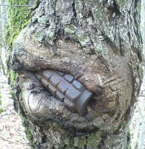 8 Hungry Trees That Have Swallowed Old War Equipment