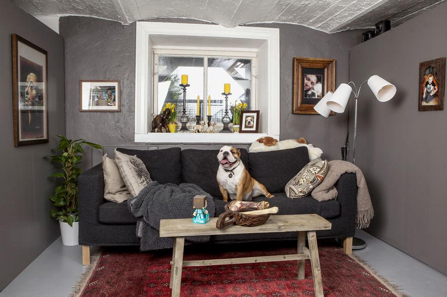 A Bulldog Love Story