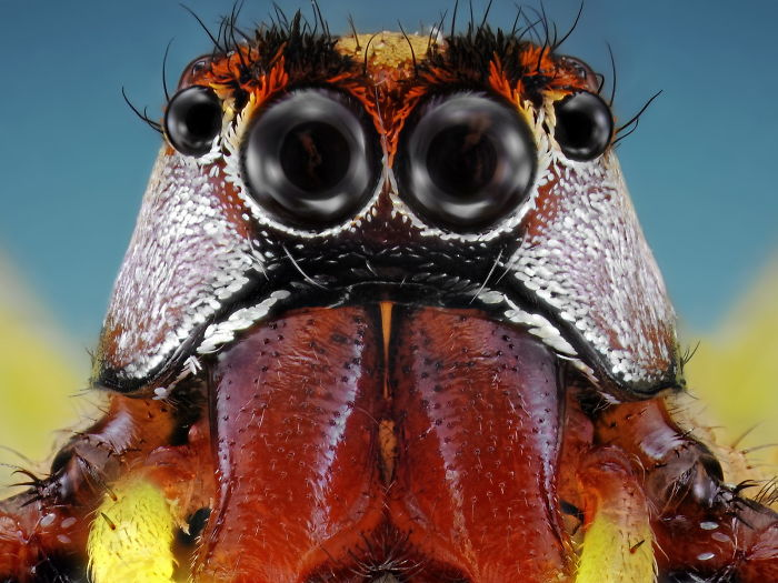 Aliens On Earth: Unbelievable Macro Portraits Of Insects By Donald Jusa