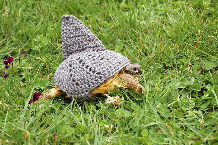 cute-crochet-tortoise-cozy-katie-bradley-18