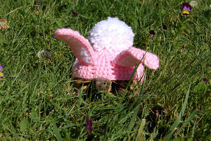 cute-crochet-tortoise-cozy-katie-bradley-20
