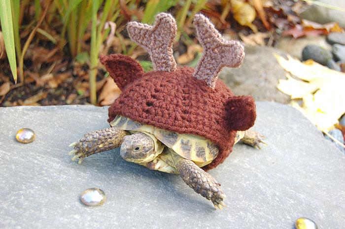 Artist Crochets Adorable Tortoise Cozies