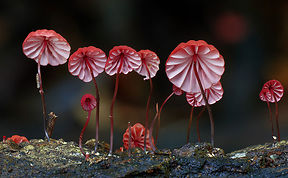 The Magical World Of Mushrooms In Macro Photography By Steve Axford