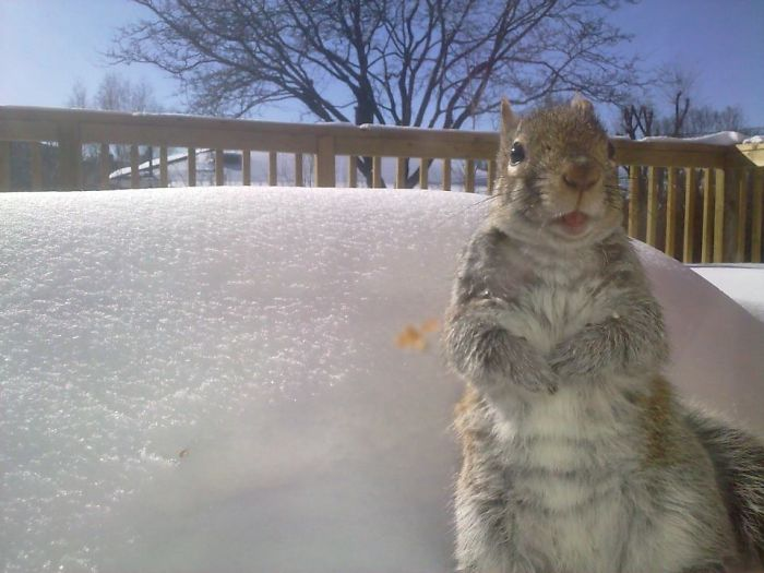 Toronto, Squirrel. Photo Taken By Sony Xperia