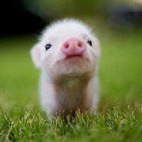 Awwwh!!! Piglet!!