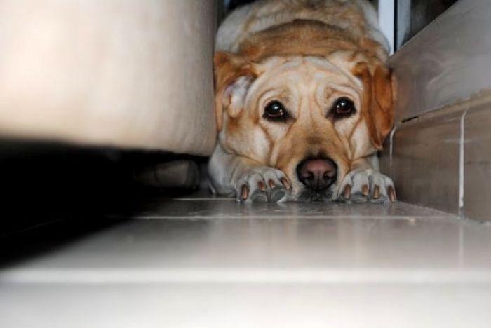 Goldie - Avoiding Bath Time !