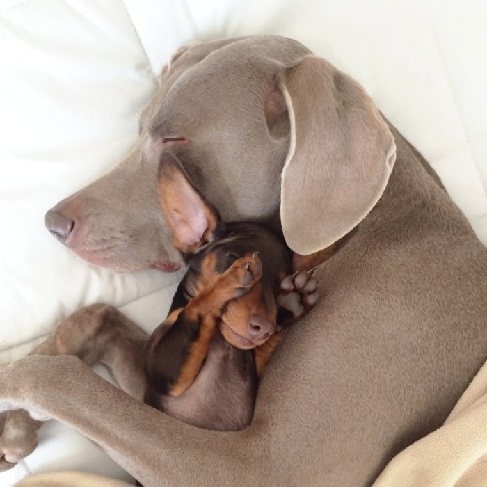 Harlow And Sage - The Cutest Pair Ever