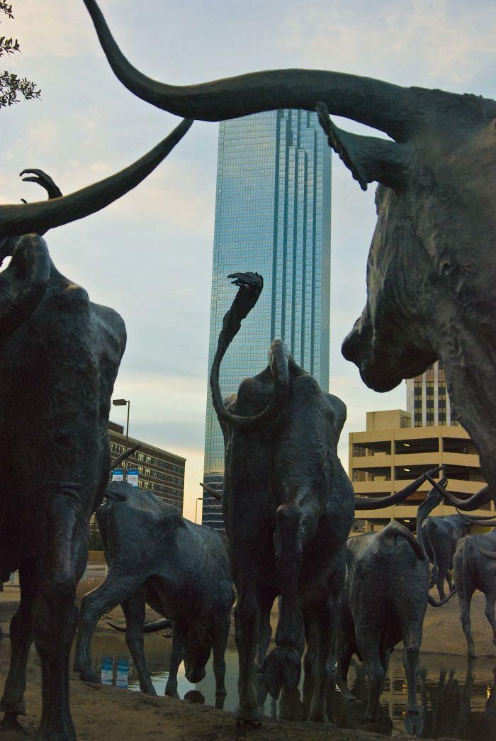 Pioneer Plaza Cattle Drive (dallas, Texas)