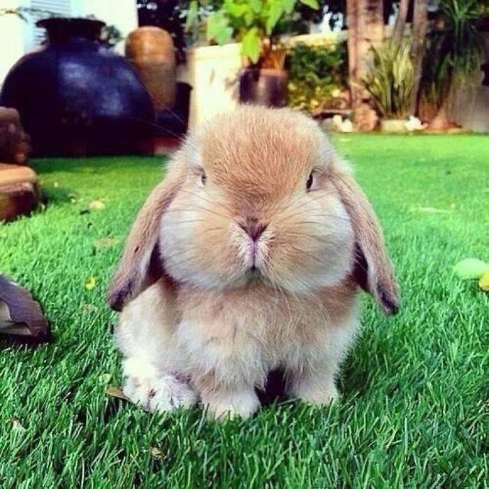 Yet An Unusually Fluffy Bunny