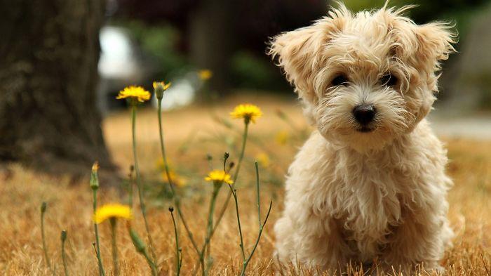 Cutest Puppy :))