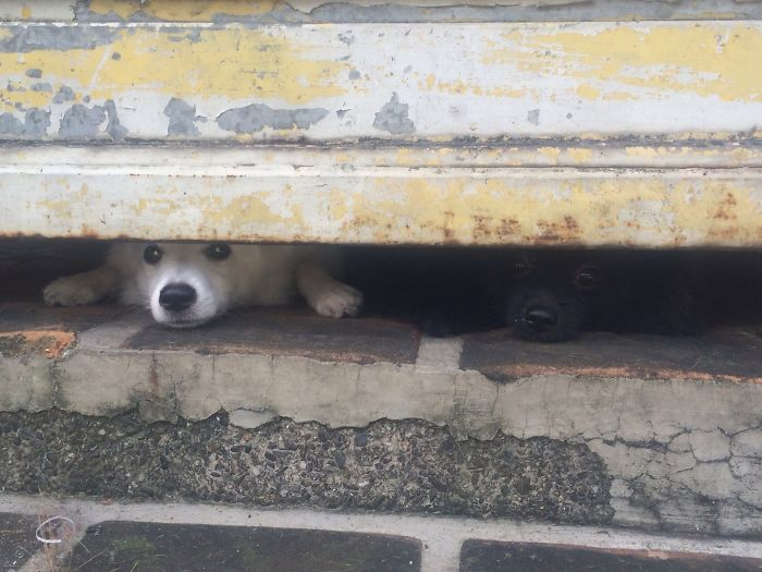 2 Pups Guarding The Dirty Gate!