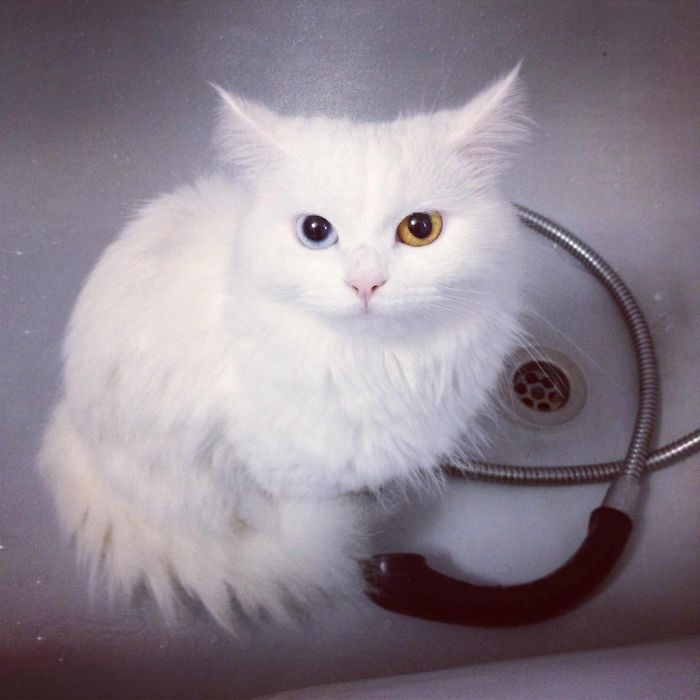 Arabella Cat Sneaking In The Bath-tub