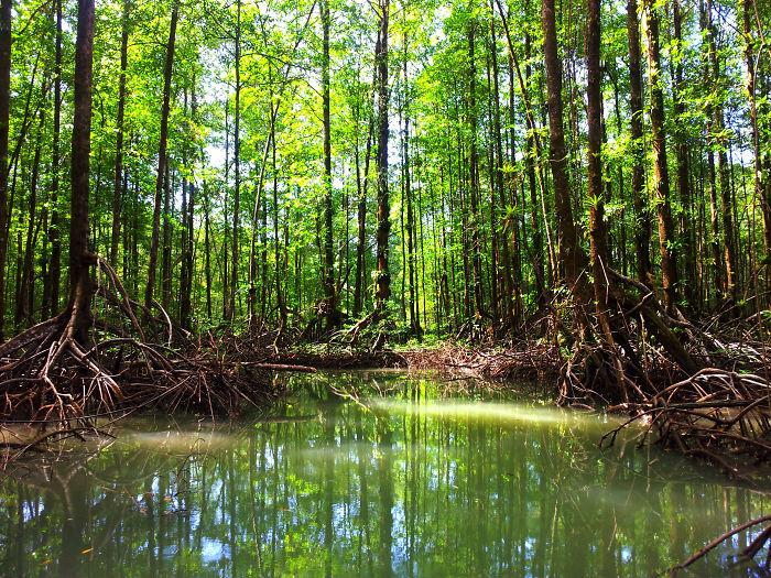 Mangroves - Rio Esquina - Golfo Dulce - Costa Rica