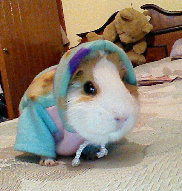 One Of My Piggies In A Cozy Sweater