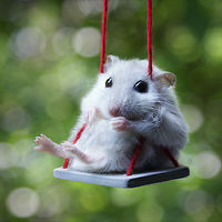Hamster On Swings