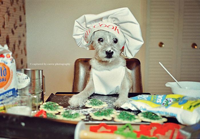 Barking Baker