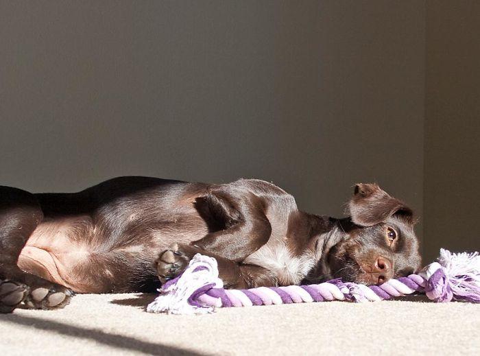 Wolfie In The Sun