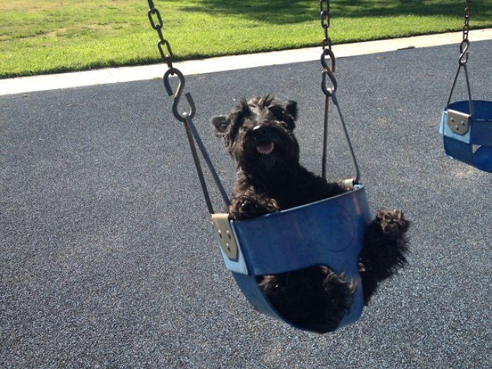 Swingin' Scottie