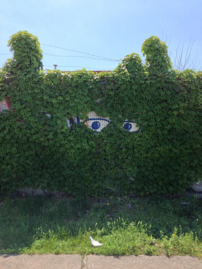 Eyes On You, Dwight Street, Red Hook, Brooklyn Via Brooklyn Imbecile