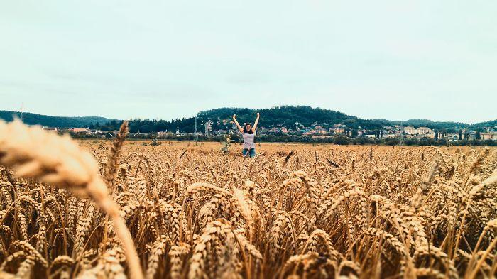 4s Grain Field