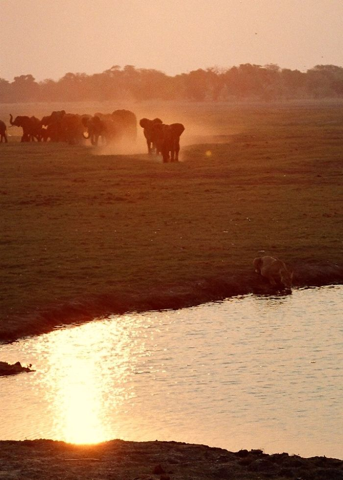 Sunset At Chobe National Park, Botswana