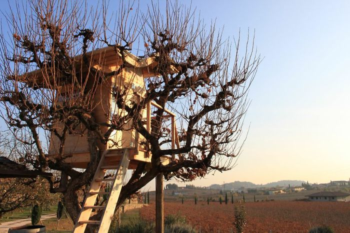 A Treehouse In The Italian Region Of Vineyards – Valpolicella
