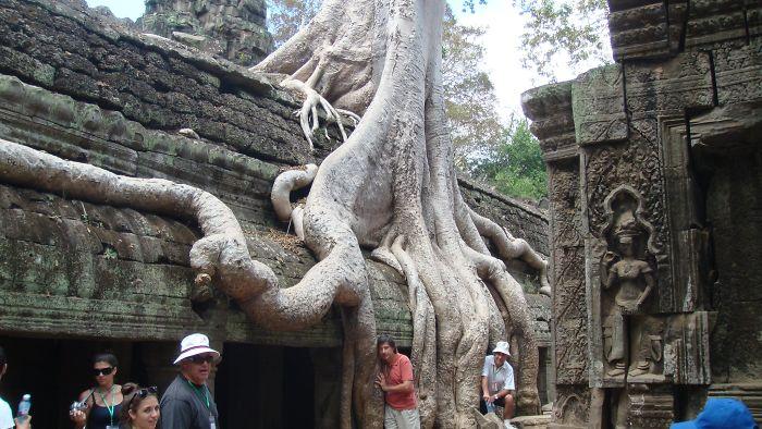 Tree Roots Cambodia