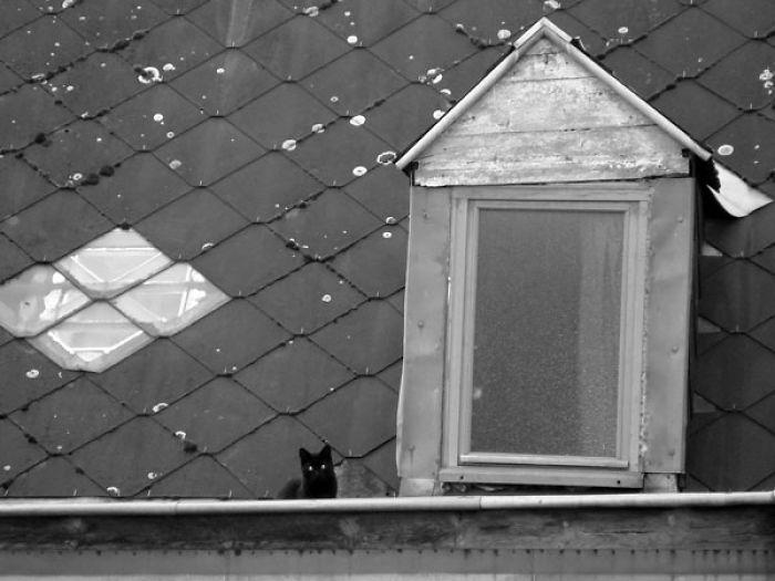 Waiting On The Roof - Roubaix, France. Céline Petit.