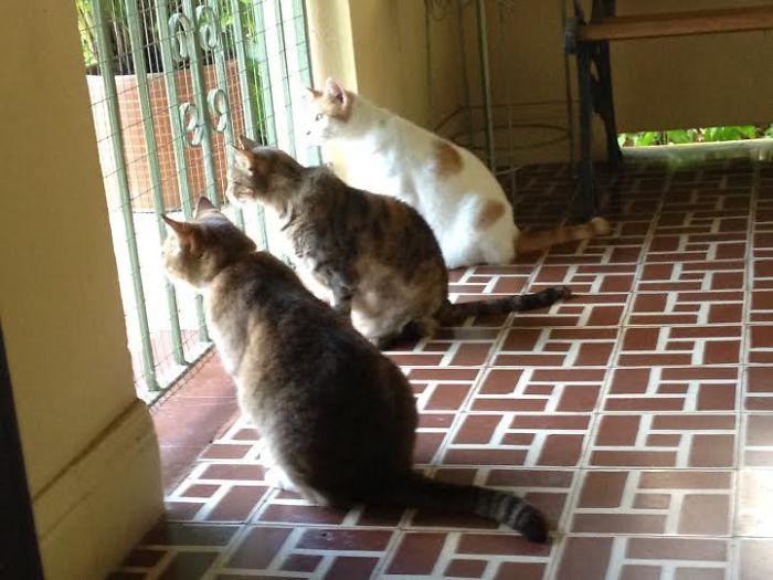 Kitty Trio Waitin For Mommy!