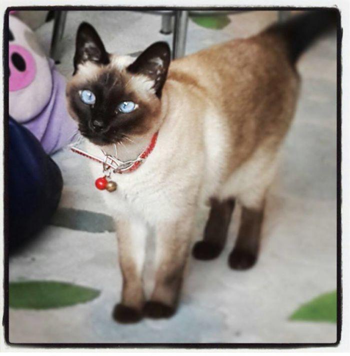My Friend's Cat Tivali