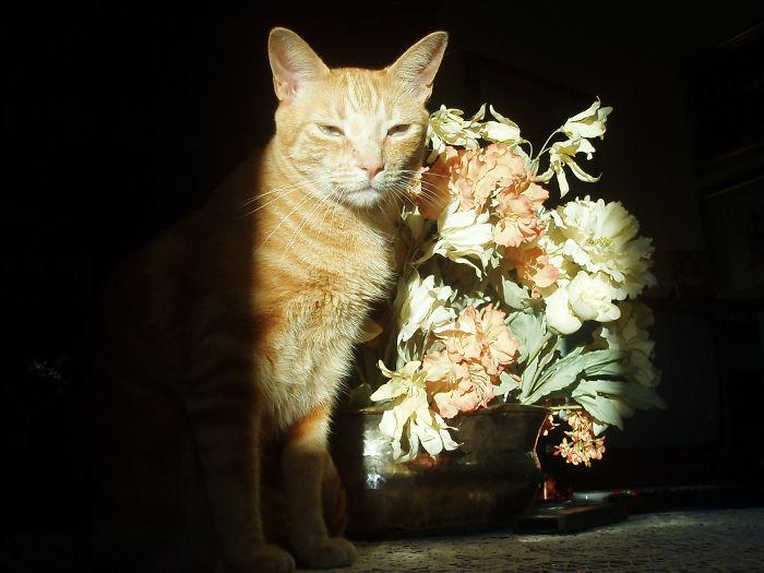 Mi Gato Fizzer