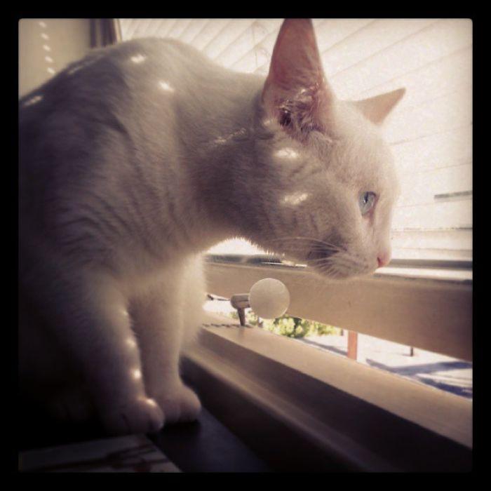 My Baby, Lucy Bowie Diamond.
