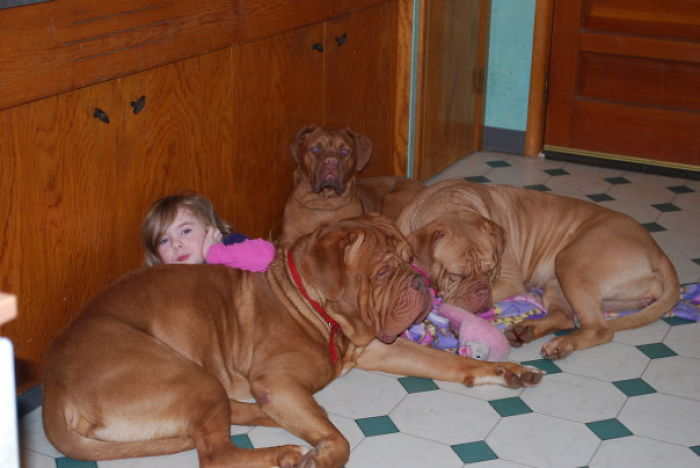 3 Big Dogs :)
