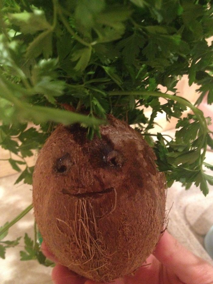 #parsley #coconut