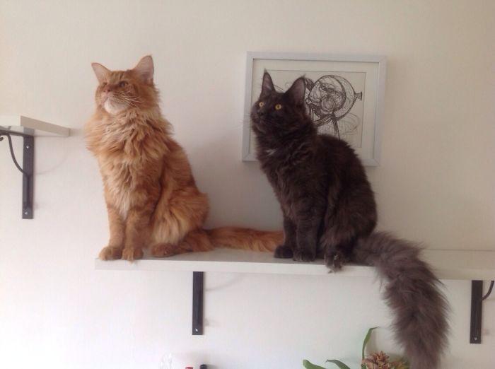 Radja & Asha Standing Guard