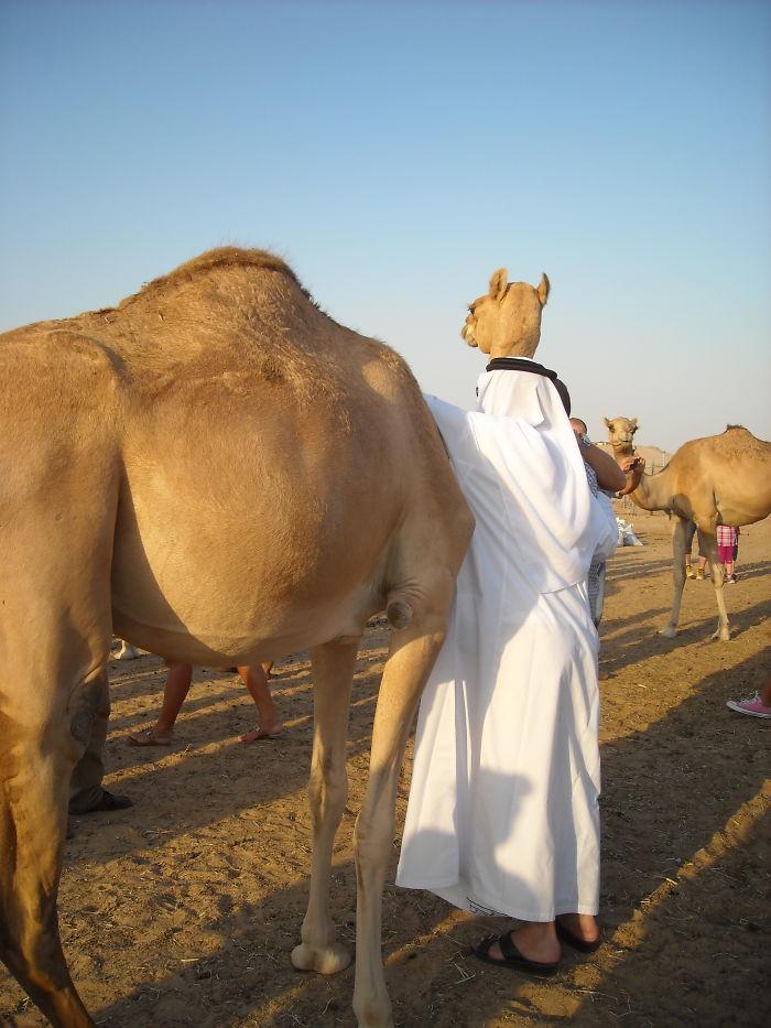 Camel In A Djellaba....