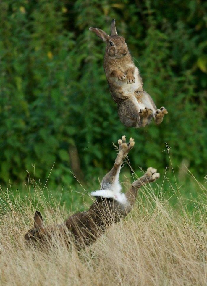 A Flying Rabbit