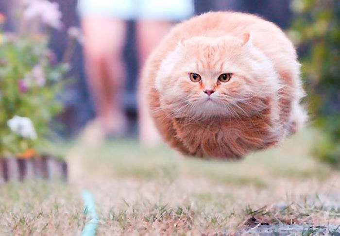 A Flying Cat