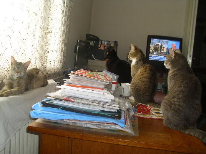 4 Bored Cats. No Tv!!!!!!!!!!