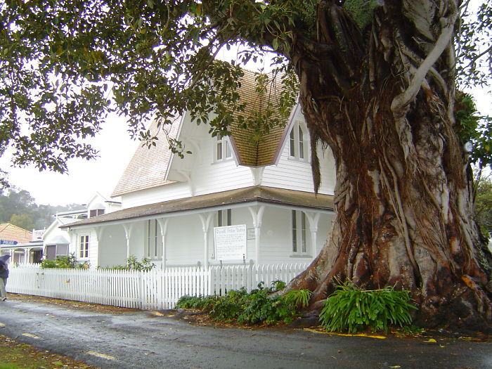 Morton Bay Fig, Russell, New Zealand.