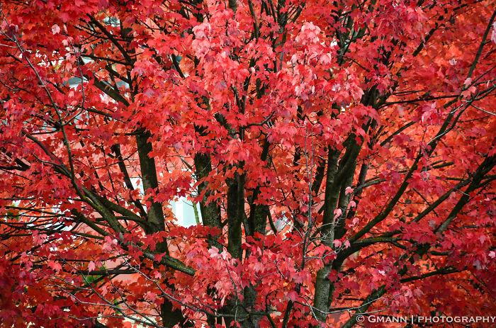 Japanese Gardens - Portland